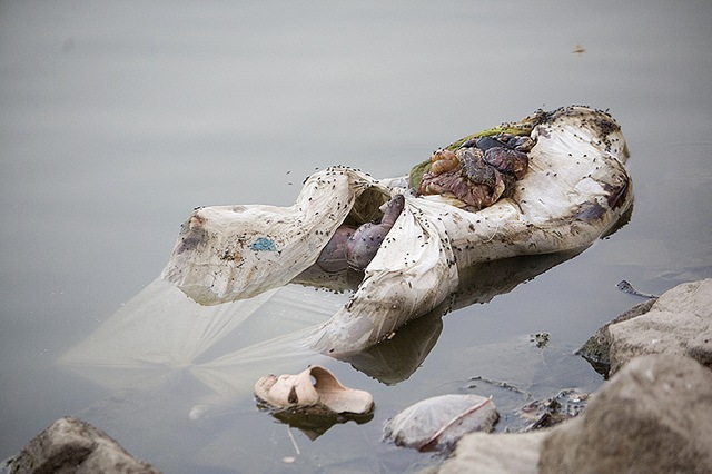 ganges river dead bodies - 640×426